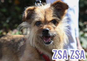 Dogs Without Borders – Los Angeles Dog Rescue