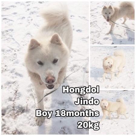 Hongdol