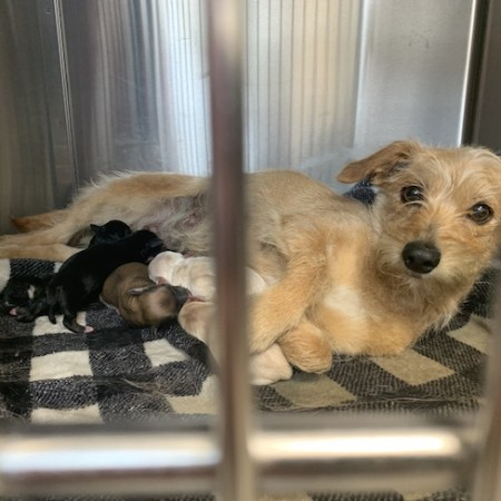 Gracie and 6 puppies