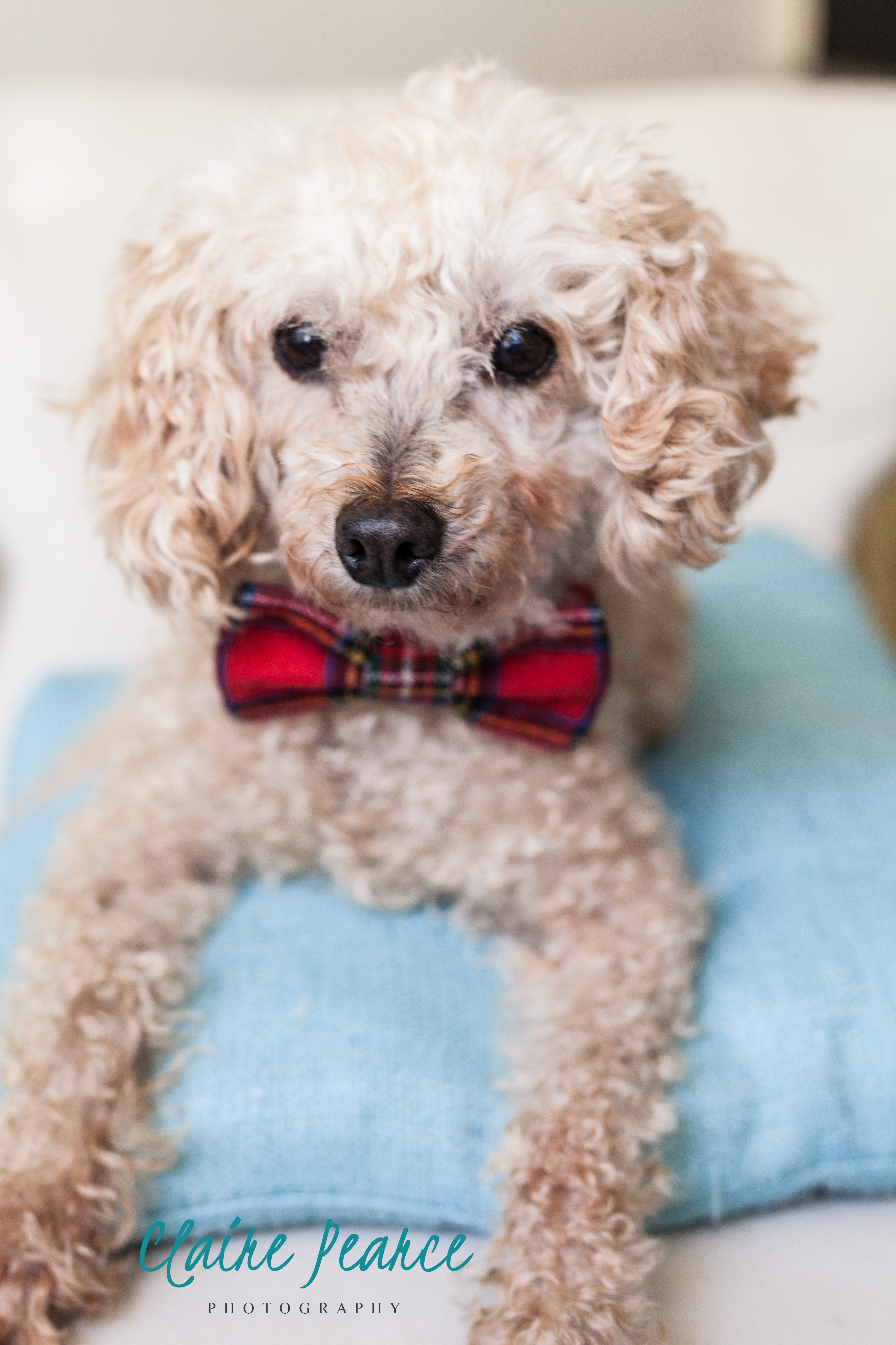 Lucky : Dogs Without Borders – Los Angeles Dog Rescue