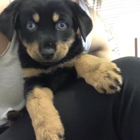 Blueberry – Mia puppy